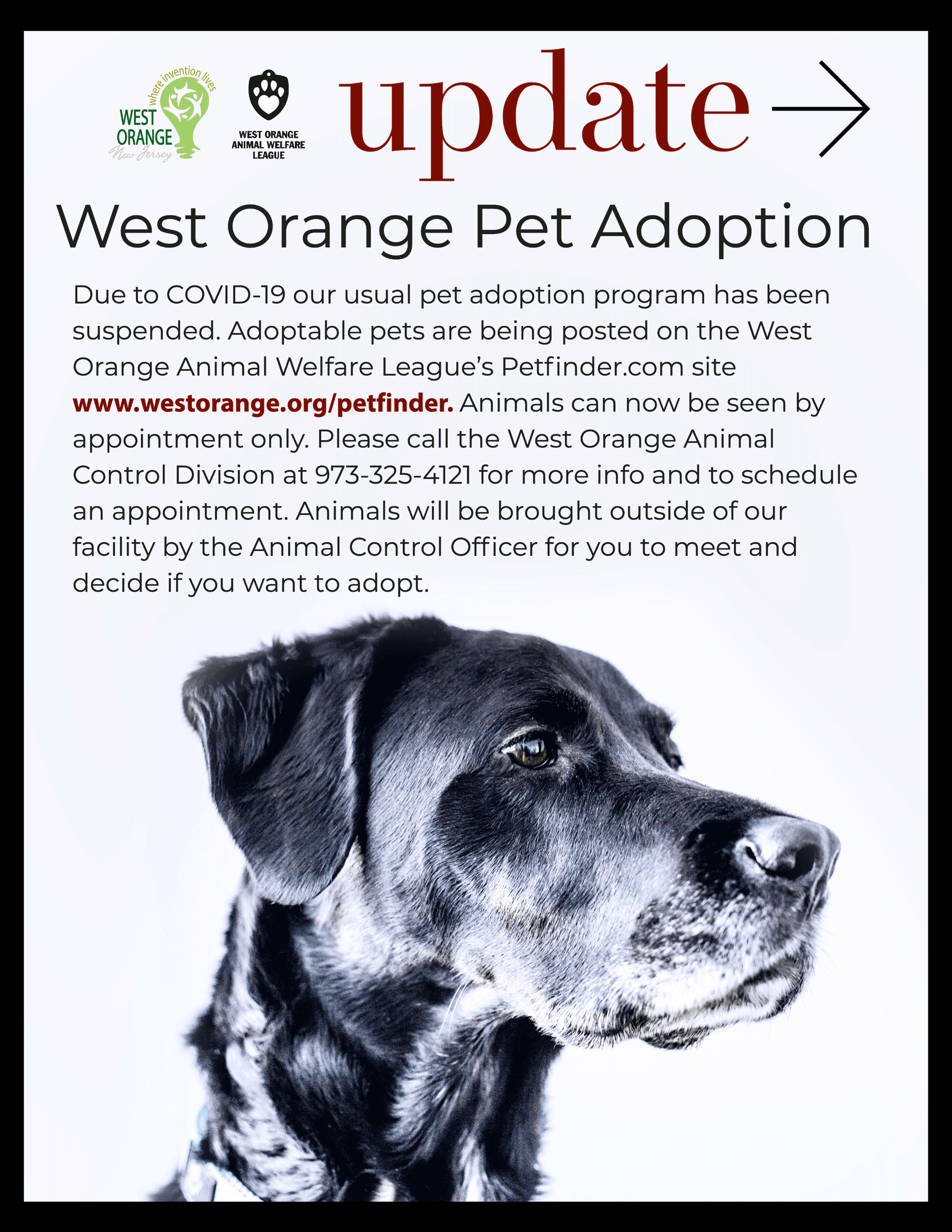 WO-Pet-Adoption-Jan2021