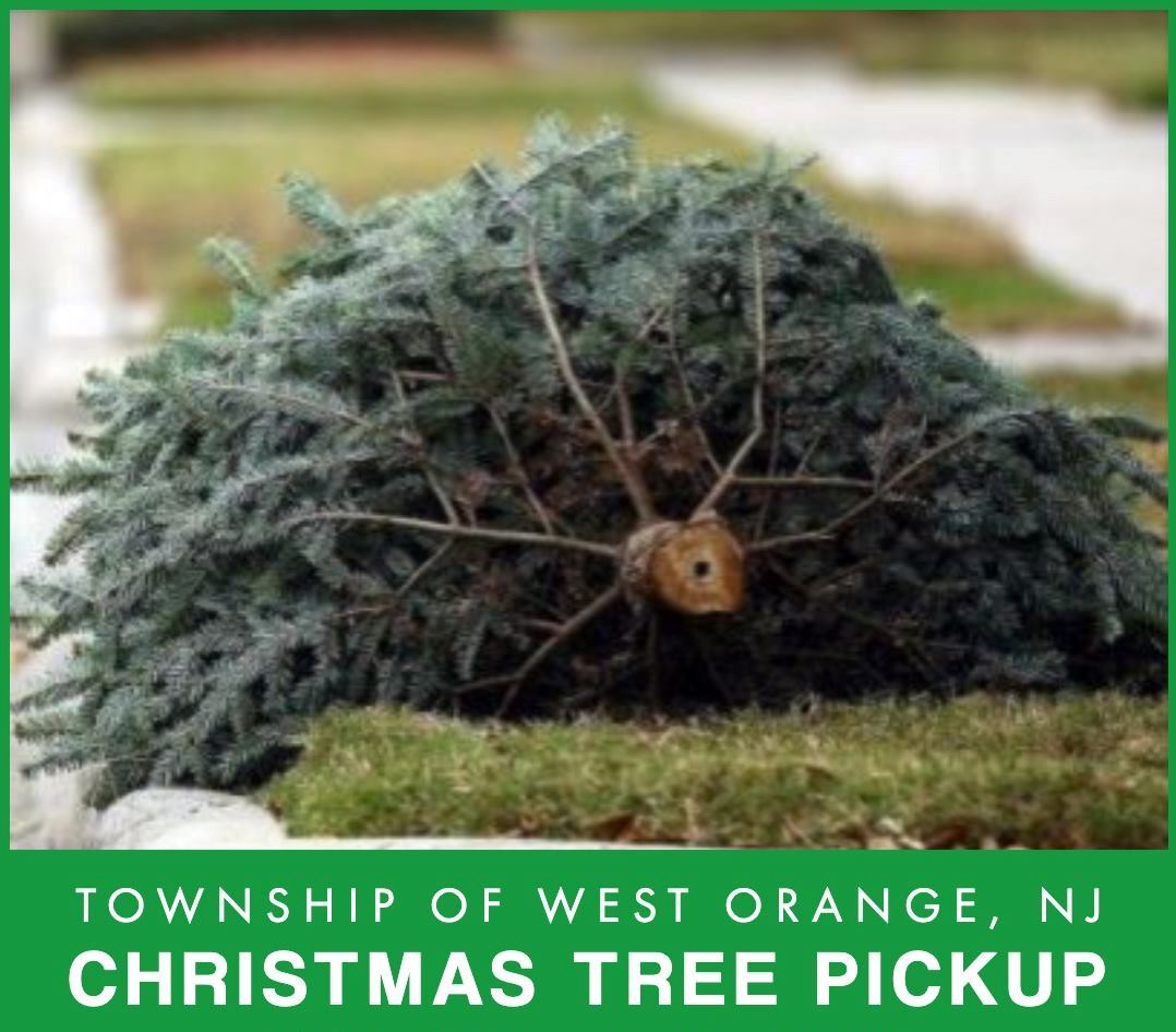 Tree pickup Updated